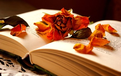 autumn-flowers-in-a-book-of-memories_5120x3200
